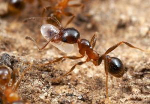 Workers ant in a colony