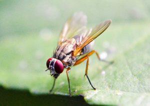 5 Ways to Get Rid of Fruit Flies - Online Pest Control