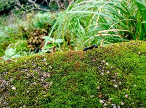 Ants can exist in a wide variety of environments.