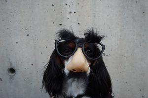 sniffer-dog