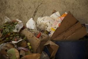 garbage flies