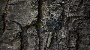 Many beetles are invasive pests.