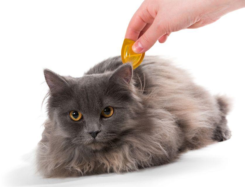 6 Natural Flea Treatments For Cats