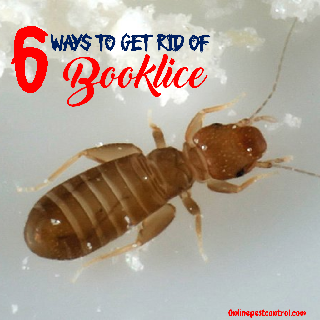 How To Get Rid Of Mildew >> 6 Ways to Get Rid of Booklice